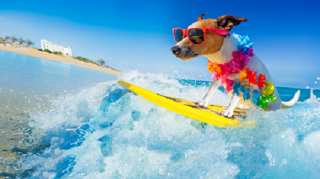 Summer-pets-care-1024x574